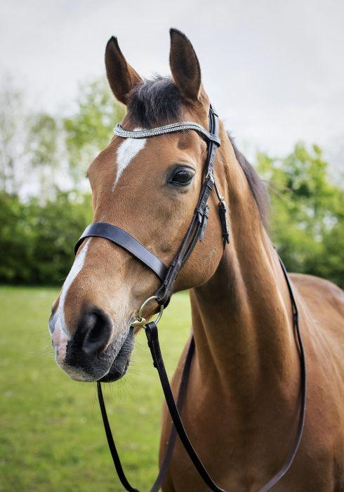 Badminton Horse Trials Horse Bit Hire